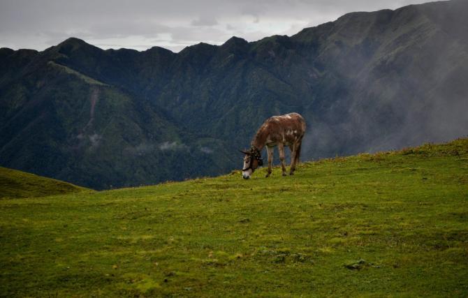 RoopKund, Bendni Bugyal, Uttarakhand